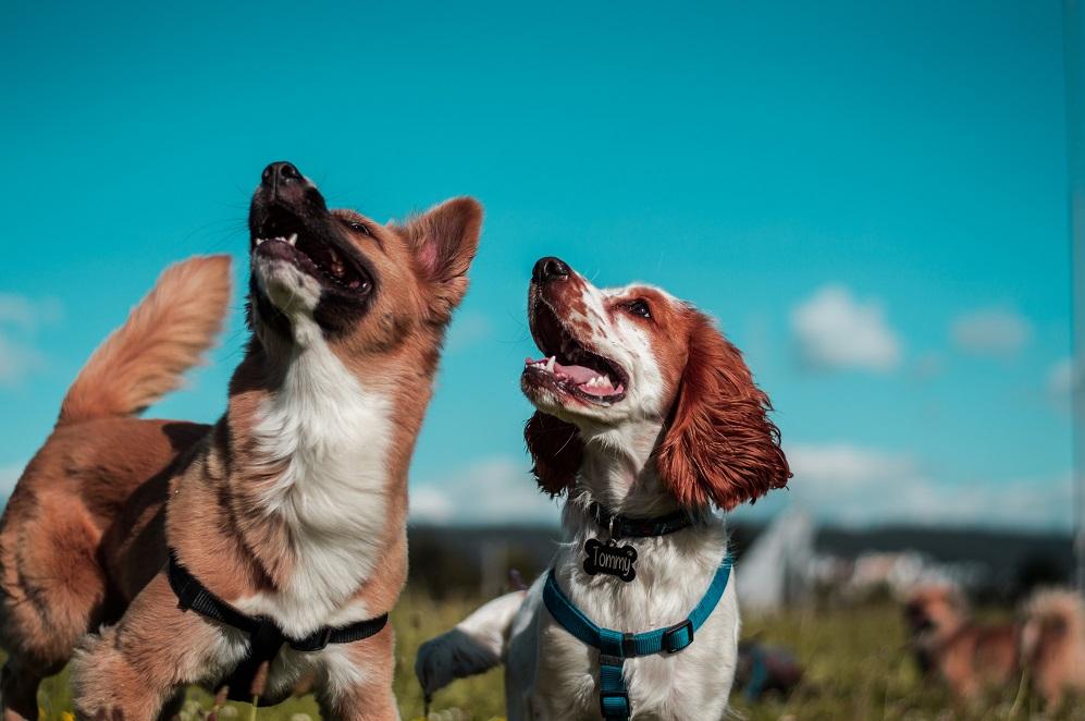 Zwierzęta w biurze - benefit pracowniczy godny uwagi